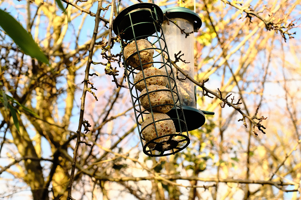 Bird feeders hanging from a tree