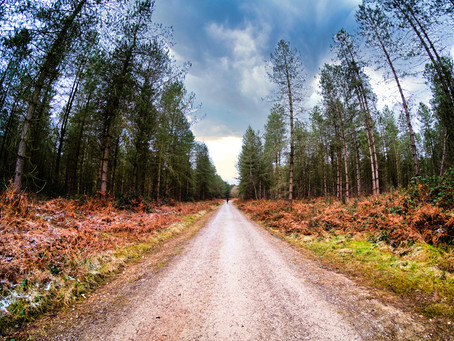 Cannock Chase Photo Walk - with the 7 Artisans 7.5mm Fisheye +Samyang F2 Lens