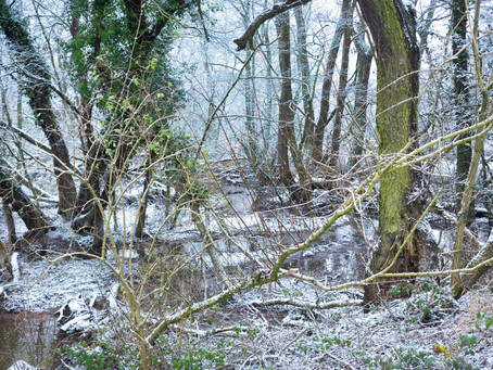 Wyrley Winter Wonderland