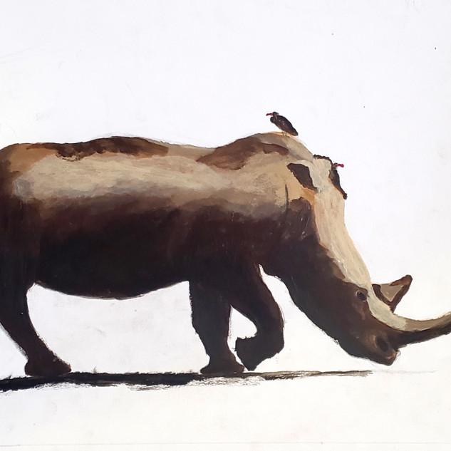 Rhino with Birds