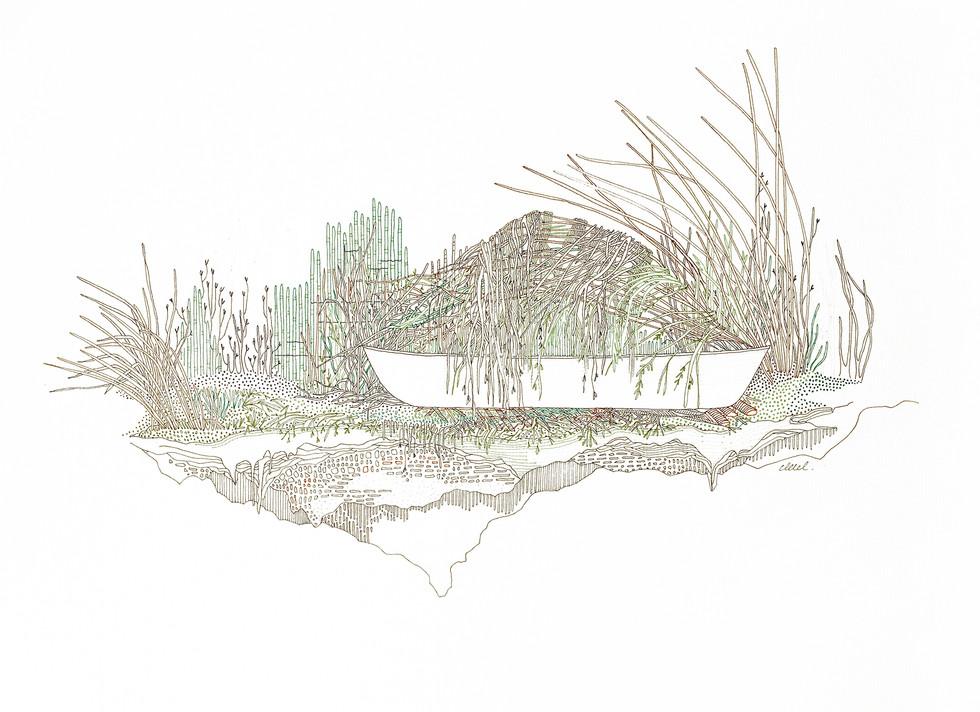 Hermon (Maine) - Reflet de roseaux à l'endroit // 42 x 29,7 cm