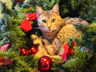 4 TIPS TO KEEP YOUR CAT HAPPY DURING THE FESTIVE SEASON