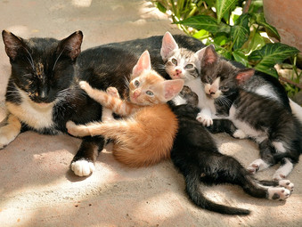 4 REASONS TO SPAY/NEUTER YOUR CAT