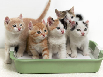 3 REASONS WHY YOU SHOULD CHOOSE UNCOVERED LITTER BOXES