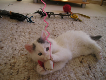 4 WAYS TO PREVENT BOREDOM IN YOUR CAT