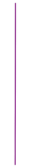 purple line.png