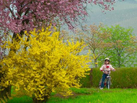 Les belles couleurs du printemps
