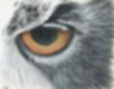 Owl Eye Sketch Ayse Rifat Wildlife Artist