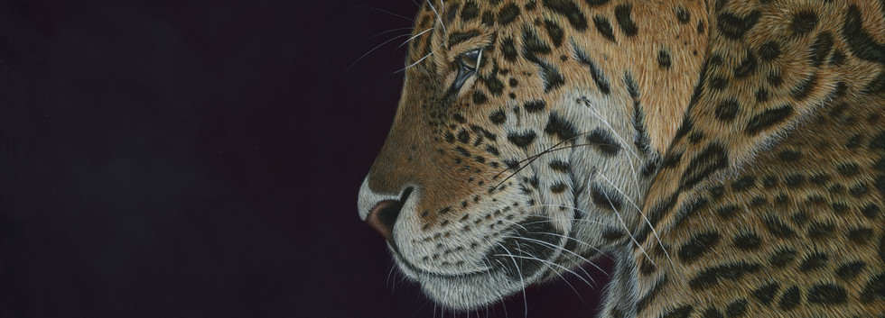 JAGUAR Painting - By Ayse Rifat Wildlife Artist