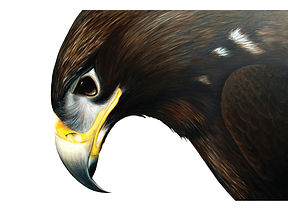 Steppe Eagle Painting by Ayse Rifat Wild