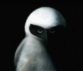 Spectacled owl.png