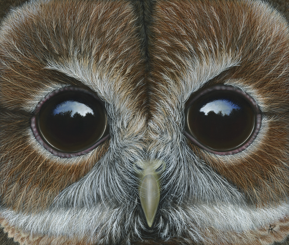 Tawny Owl Painting, Owl Painting
