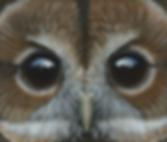 TWANY OWL PAINTING.png
