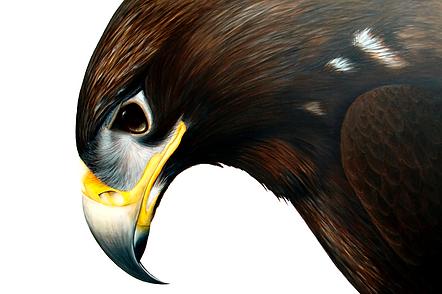 Eagle Painting by Ayse Rifat Wildlife Ar