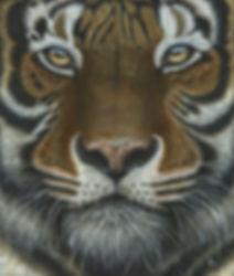 Siberian - Amur - Tiger - Big Cat