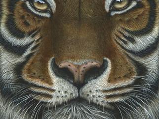 Explorers against Extinction 2020  -  Invitational Artist