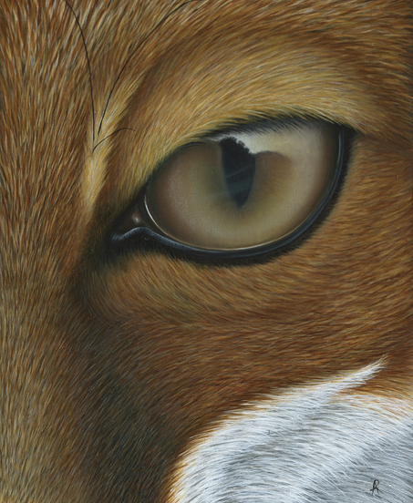Fox Painting - Waiting it out - Ayse Rif