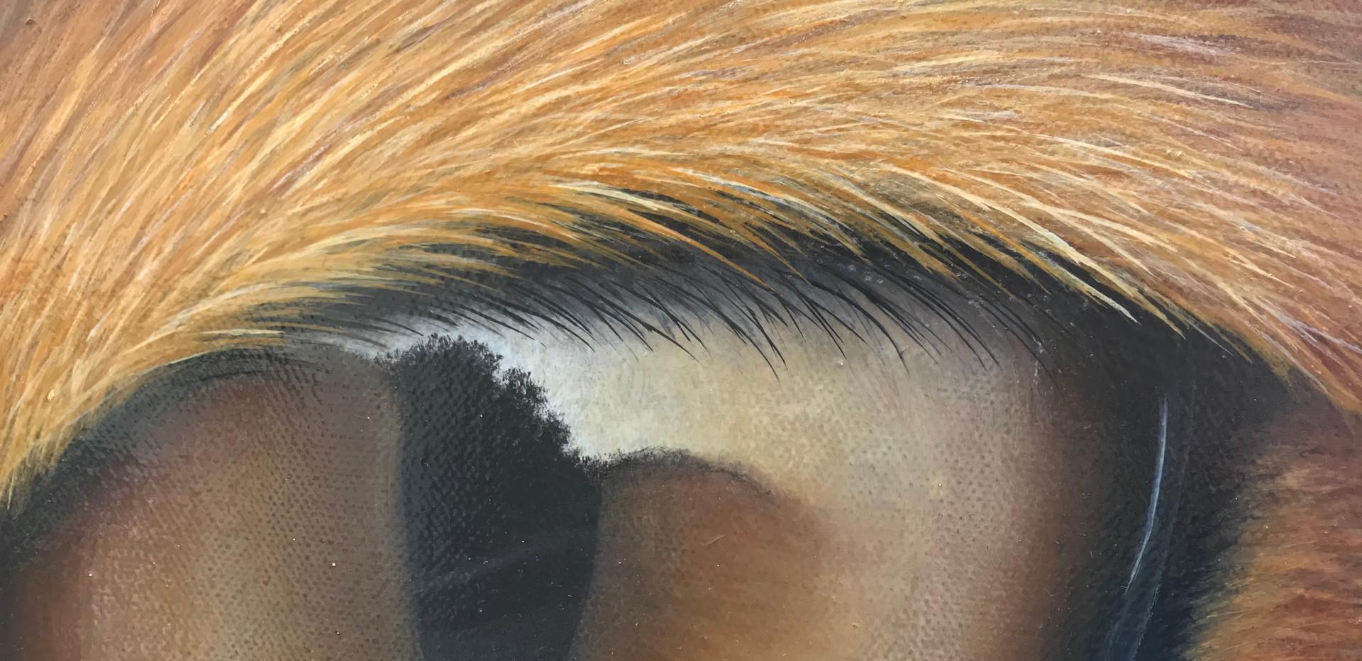 Fox Painting - Ayse Rifat Wildlife Artist