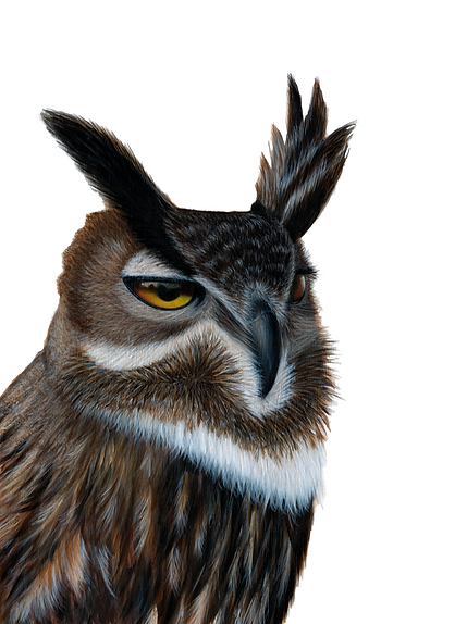 Eagle Owl Painting Red Panda Painting by Ayse Rifat Wildlife Artist