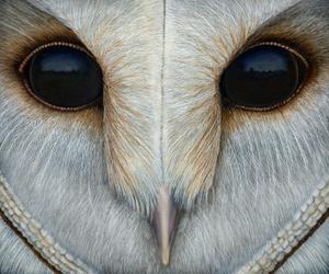 Barn Owl - Barn Owl Painting