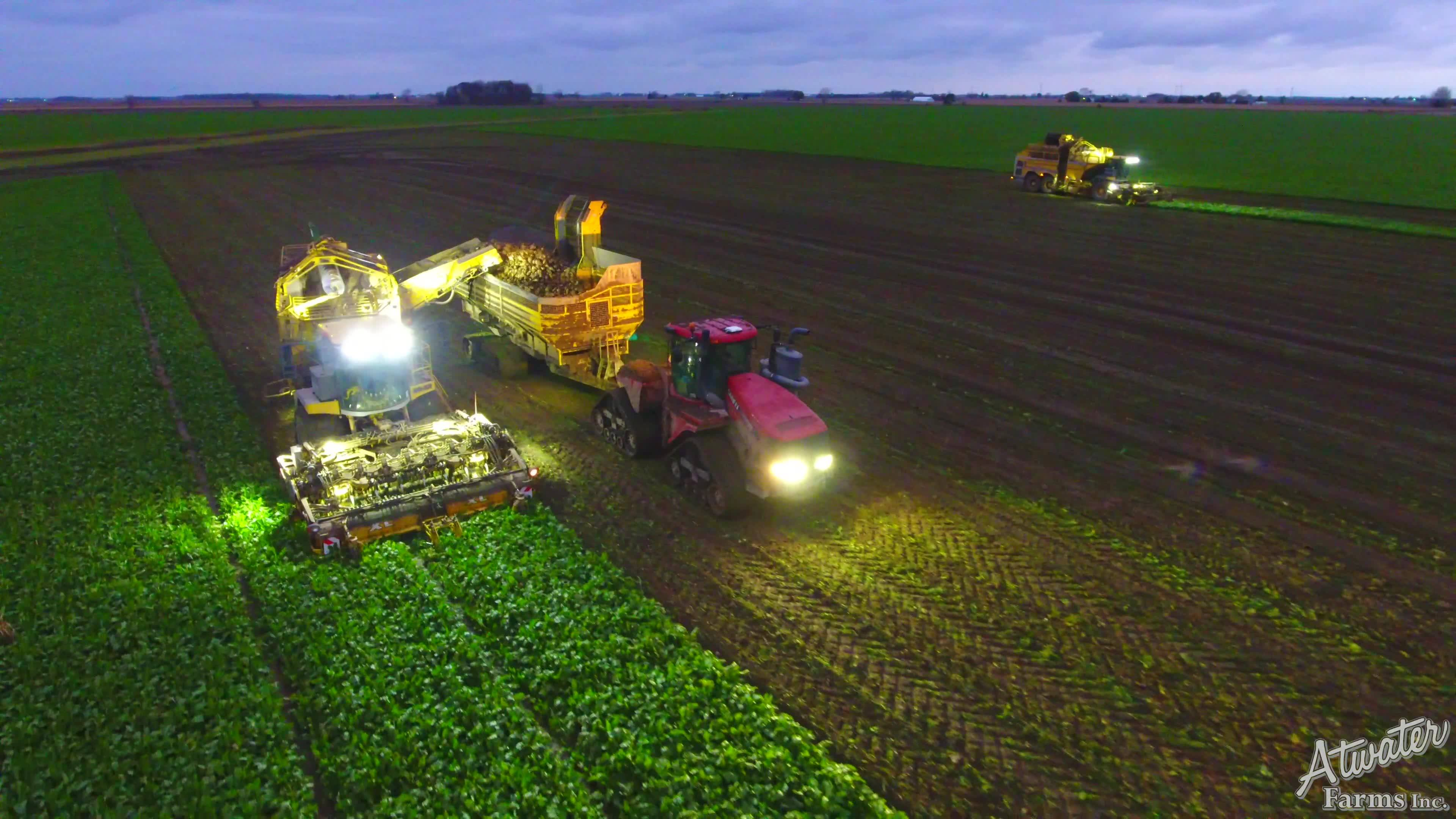 Beet Harvest Preview II