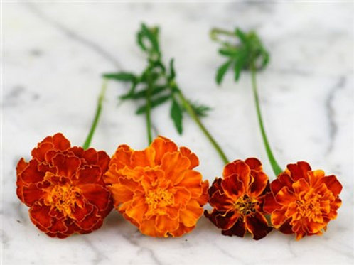 Brocade Mix Marigold