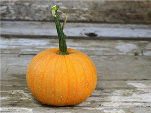 Luxury Pie Pumpkin