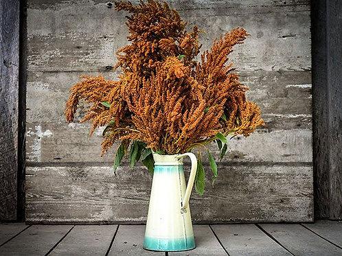 Golden Giant Amaranth