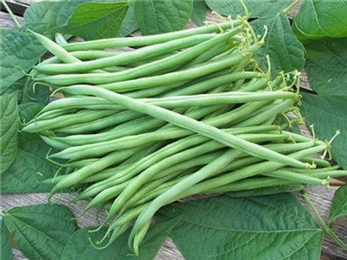 Calima Beans