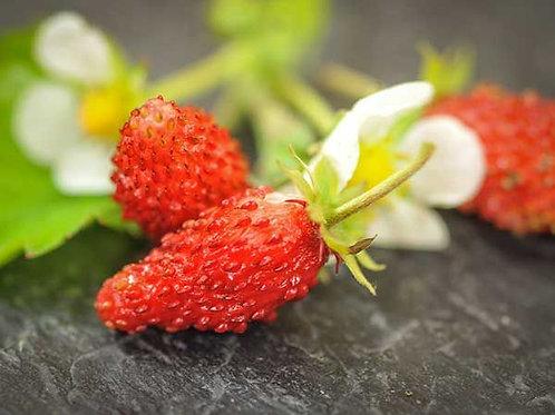 Regina Alpine Strawberry