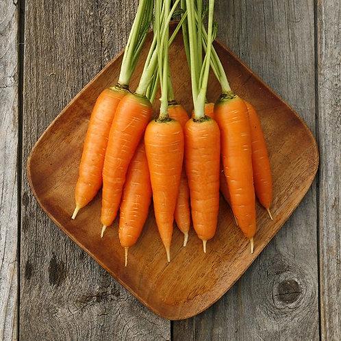Danvers Carrot