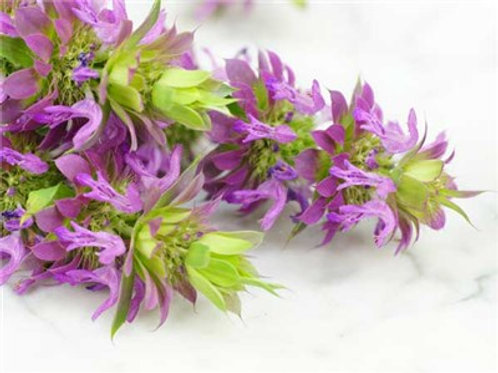 Bee Balm- Lemon