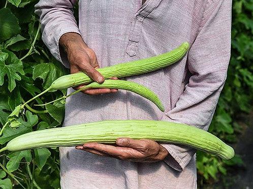 Armenian Yard-Long Cucumber