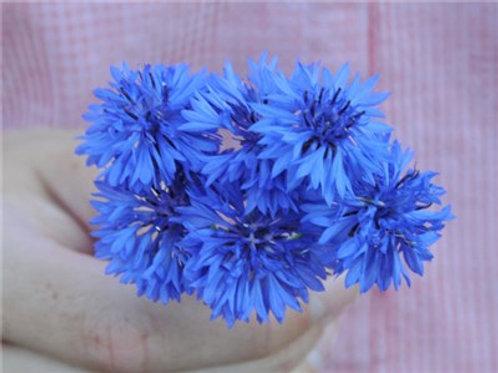 Blue Boy Bachelor Button
