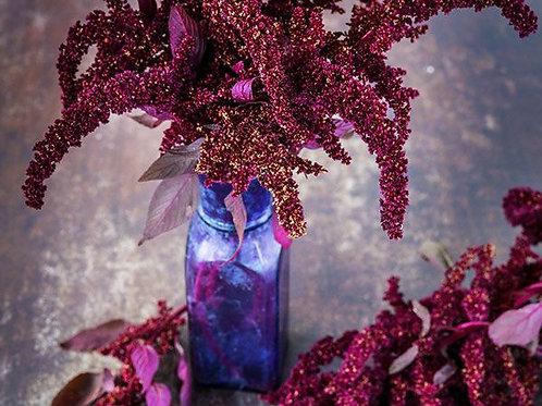Hopi Red Dye Amaranth