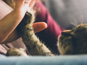 Yes! Therapy cats are a thing and they're pretty amazing!