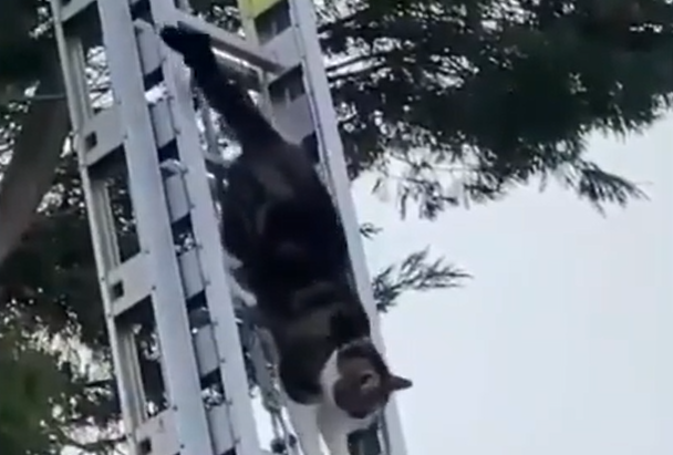 Cat rescues self from tree as firefighters watch