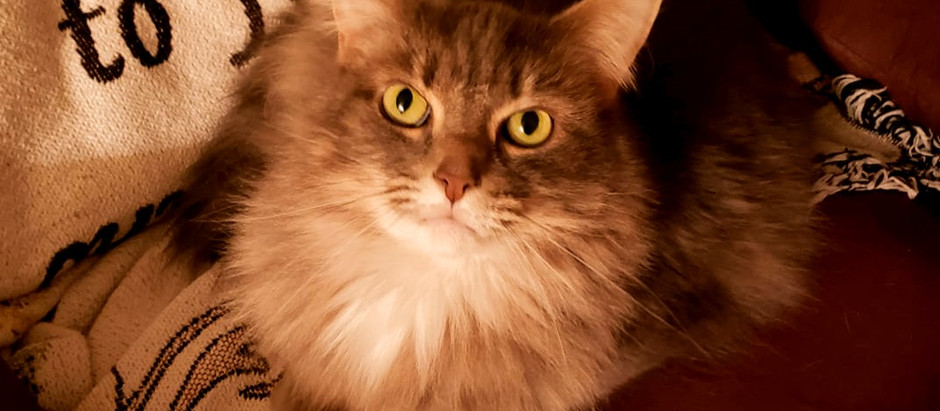 The PURRfectly amazing reason your cat purrs