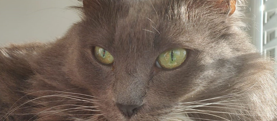 The whiskering world of cat speak: What do they mean?