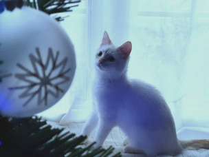 What's stressing your cat out about the holidays will surprise you