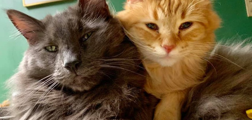 Before you bring another cat home, read this!