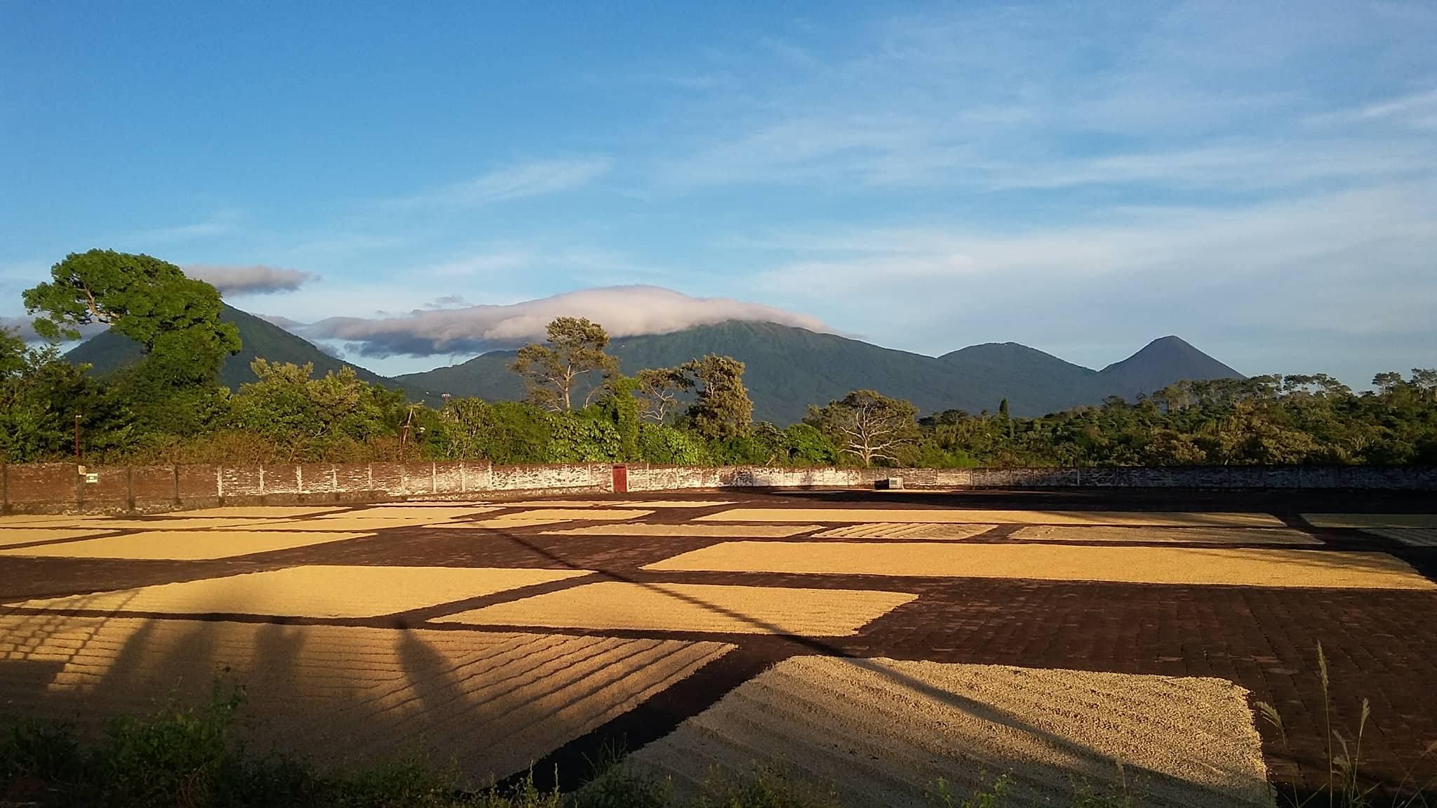 drying patios coffee mill