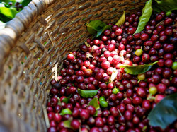 basket coffee