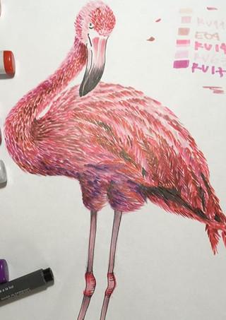 desenho flamingo.jpg