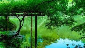 おすすめ映画|言の葉の庭