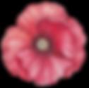 Poppy Vorder