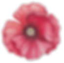 Purple Poppy | For all the animals
