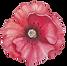 Poppy avant
