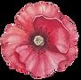Poppy Front