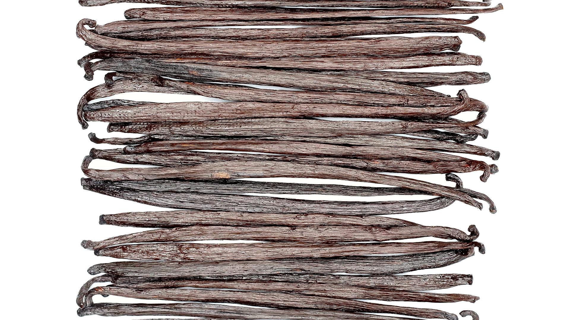 Mexican Vanilla Beans - Extract Grade (Grade B)